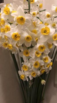 さやかのブログ:季節のお花??